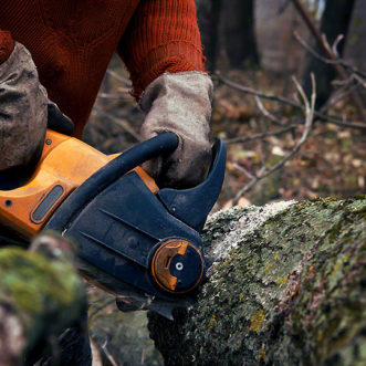 What To Expect From Tree Services